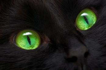blackcatgreeneyes