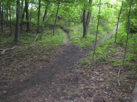 cr-two-paths-diverged-in-a-wood-and-i
