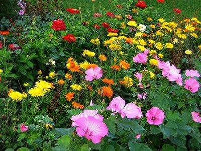 flower garden gardening-thumb