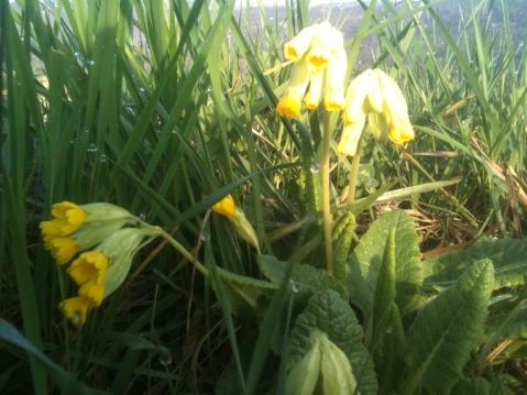 wild flowers 33