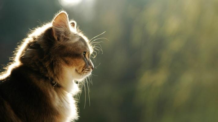 Cat-observing