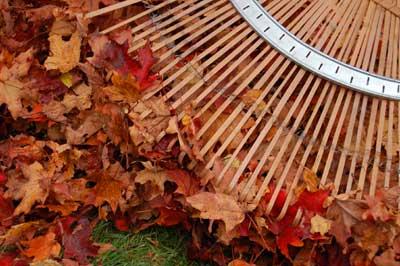 raking leaves 777