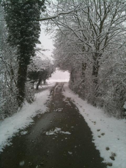 snow Feb 1 2012