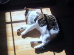 cat sunlight2