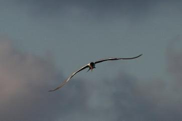 bird flying33