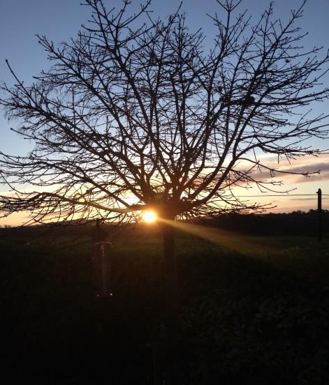 dawn 2013 solstice
