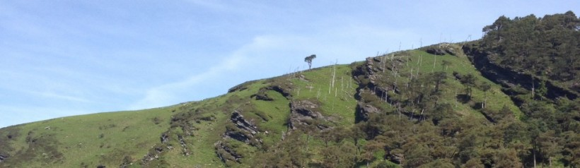 cropped-tree-hill.jpg