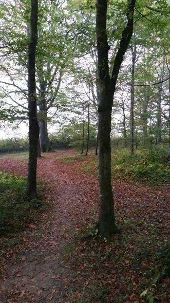 path44
