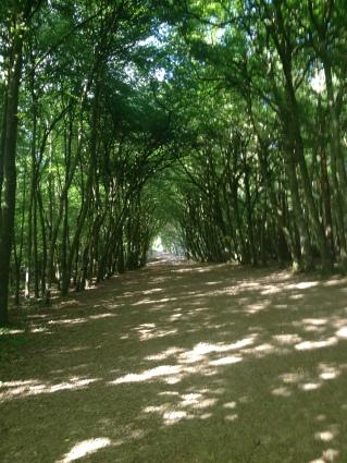 mullaghrellan woods