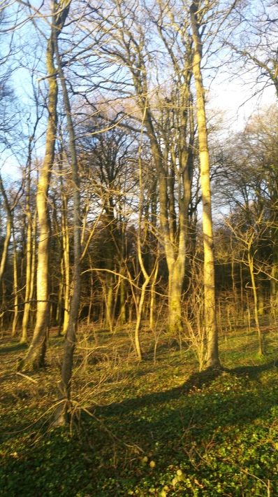 forest light 2