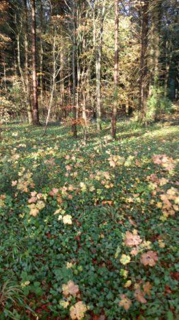 leaves in wood
