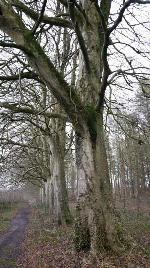 trees333