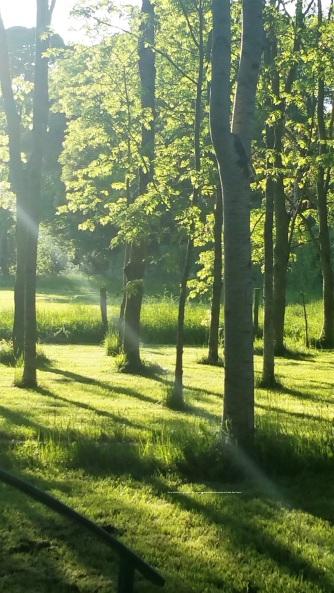 trees quote 1
