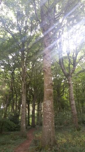 Woods 44