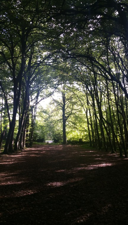 dark-woods
