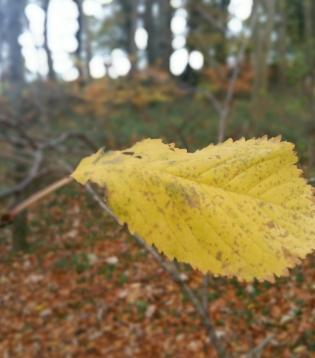 leaf-4777
