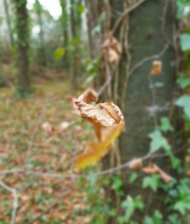 leaf-blur