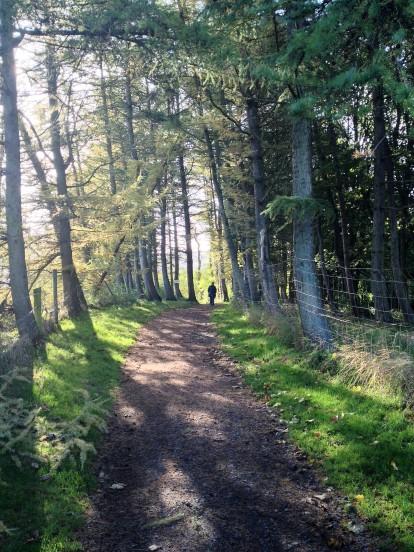 walk-woods
